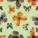 Butterfly seamless 04 Stock Images