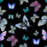 Butterfly seamless 05 Royalty Free Stock Photos