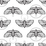 Butterfly seamless vector background Royalty Free Stock Photo