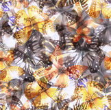 Butterfly seamless 03 white Stock Images