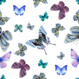 Butterfly seamless 05 white Royalty Free Stock Image