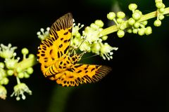 Butterfly. Season forest rainforest Stock Photos