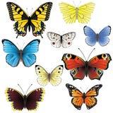Butterfly set vector illustration