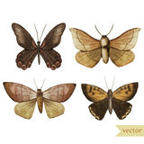 Butterfly set Royalty Free Stock Image