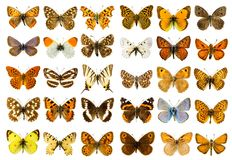 Butterfly set Royalty Free Stock Photos