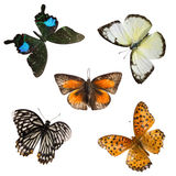 Butterfly set collection Stock Photos