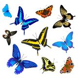 Butterfly set for design Royalty Free Stock Photo