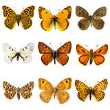 Butterfly set Royalty Free Stock Photography