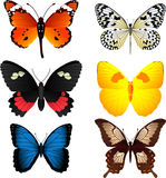Butterfly set 1. Six beautiful colorful butterflies collection  illustration Royalty Free Stock Photography