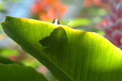 Butterfly Shadow. Shadow of butterfly on tropical plant Stock Images
