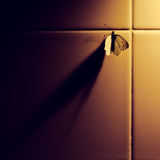 Butterfly and shadow. A butterfly under lamp at the kitchen Stock Image