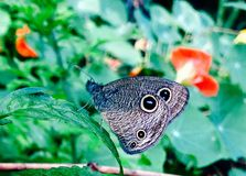 Butterfly. Shoot after rain- beautiful butterfly (ios click Stock Photo
