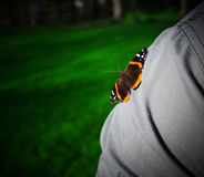Butterfly shoulder. Butterfly landed on shoulder for friendship Stock Photos