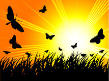 Butterfly Silhouette. Silhouette of butterflies against the morning sun royalty free illustration