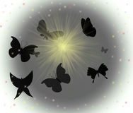 Butterfly silhouettes. In the night Stock Photos