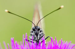 Butterfly sit on flower Royalty Free Stock Image