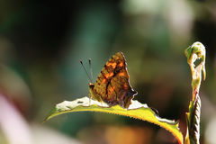 Butterfly sit on green leaf Stock Photo