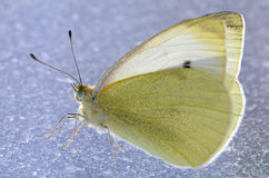 Butterfly sit on ice Stock Photo