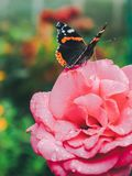 A butterfly sits on a beautiful flower stock photos