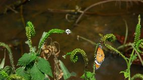 Butterfly sits on a branch near pond. Video stock footage