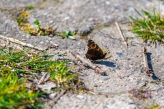 A butterfly sits on a dirt road in nature