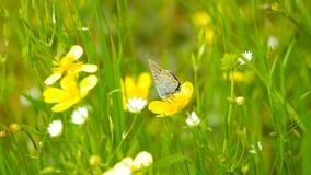 A butterfly sits on a flower in the park. A butterfly sits on a flower in a park on a summer day stock footage