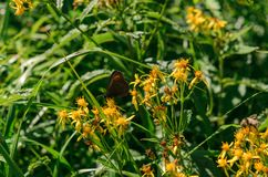 A butterfly sits on a flower. stock images