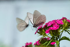 The butterfly sits on flowers royalty free stock photography