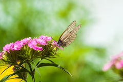The butterfly sits on flowers royalty free stock images