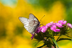 The butterfly sits on flowers Royalty Free Stock Photos