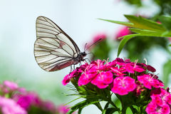 The butterfly sits on flowers royalty free stock image