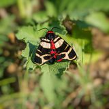 Butterfly sits on the foliage of a plant. Habitat. Butterfly sits on the foliage of a plant. Web banner. Summer season august royalty free stock photography