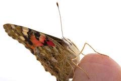 Butterfly sits in the hand Royalty Free Stock Images