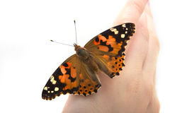 Butterfly sits in the hand Royalty Free Stock Photography