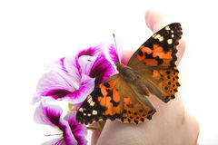 Butterfly sits in the hand Stock Photo