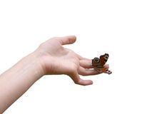 The butterfly sits on a hand. The art close-up shot of the butterfly sits on a hand Stock Photography