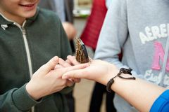 Butterfly sits on a human hand. Beautiful butterfly sits on a human hand stock photo
