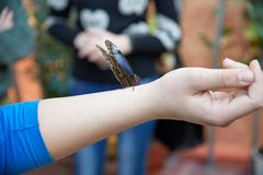 Butterfly sits on a human hand Royalty Free Stock Photography