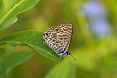 Butterfly. The butterfly sits on a leaf of the plant royalty free stock image