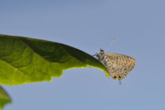 Butterfly. The butterfly sits on a leaf of the plant royalty free stock photo