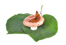 The butterfly sits on a  mushroom Royalty Free Stock Photo