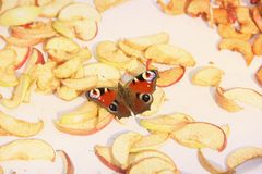 Butterfly and dried apples