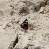 Butterfly sits on the sand. Web banner royalty free stock photo