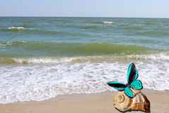 Butterfly sits on seashell Royalty Free Stock Photography