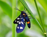 Butterfly sits on a stalk of grass. On the blurred green background Royalty Free Stock Photo