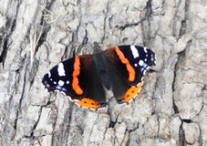Butterfly sits on a tree - beautiful, beautiful insect Stock Images