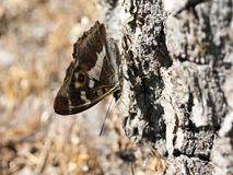 Butterfly. Sits on a tree trunk, macro Royalty Free Stock Photo