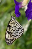 The butterfly sitting on the blue flower stock images