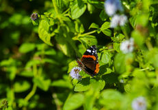 Butterfly sitting on the bush Royalty Free Stock Photo
