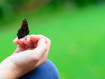 Butterfly sitting on child's hand. Black Butterfly sitting on child's hand - shallow depth of field stock photo